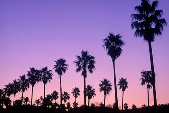 ヤシの木と夕焼け.jpg